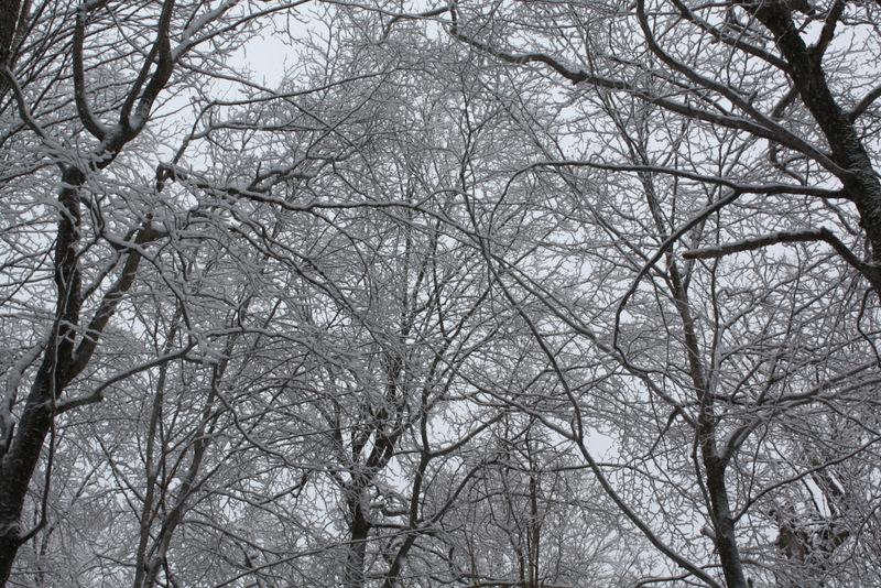 Winter Wonderland - Porter Cascade - Adirondacks