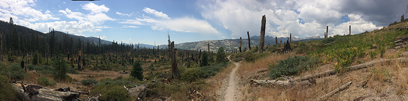 Wildfire Burned Out Meadow | Pacific Crest Trail